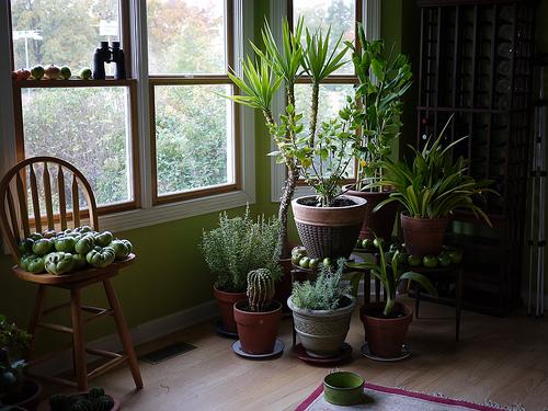 Collection Indoor Plants Interior Design Pictures